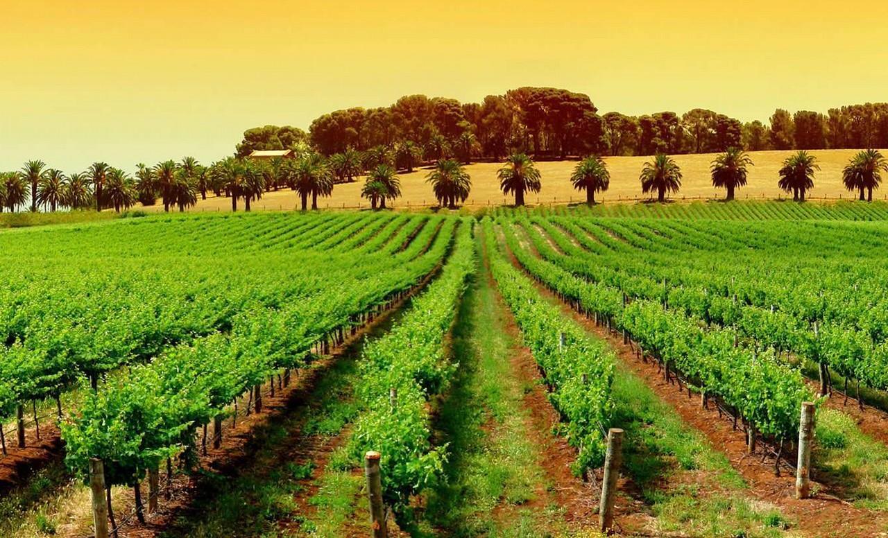 Sensores de suelo para agricultura de precisión